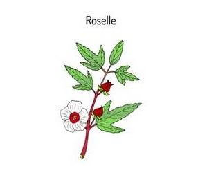 ROSELLE / MESHTA / MESTA